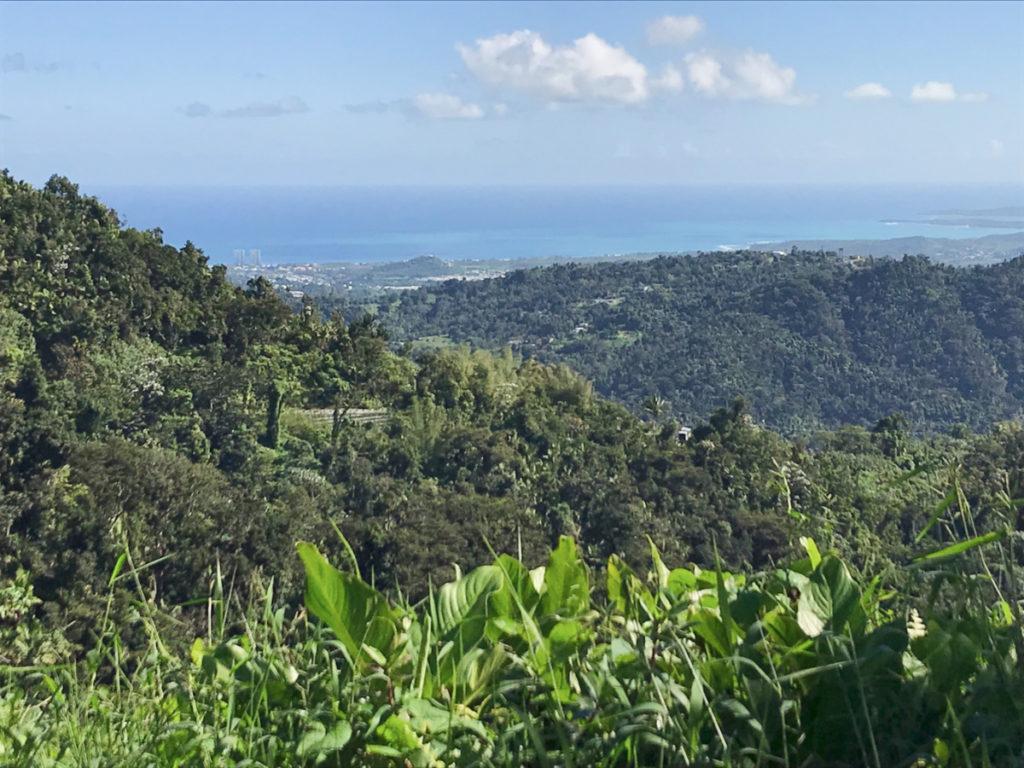 El Yunque, floresta nacional em Porto Rico.