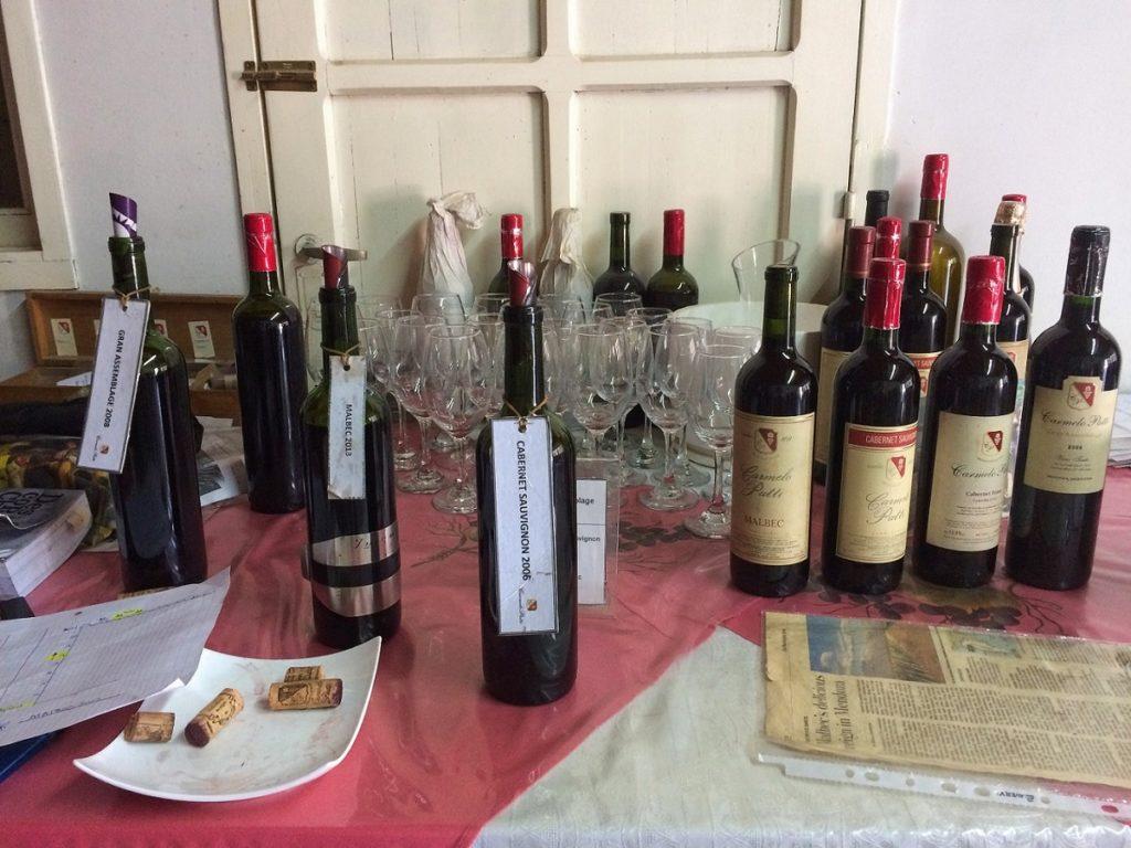 Mendoza - Visitando vinícolas com motorista particular