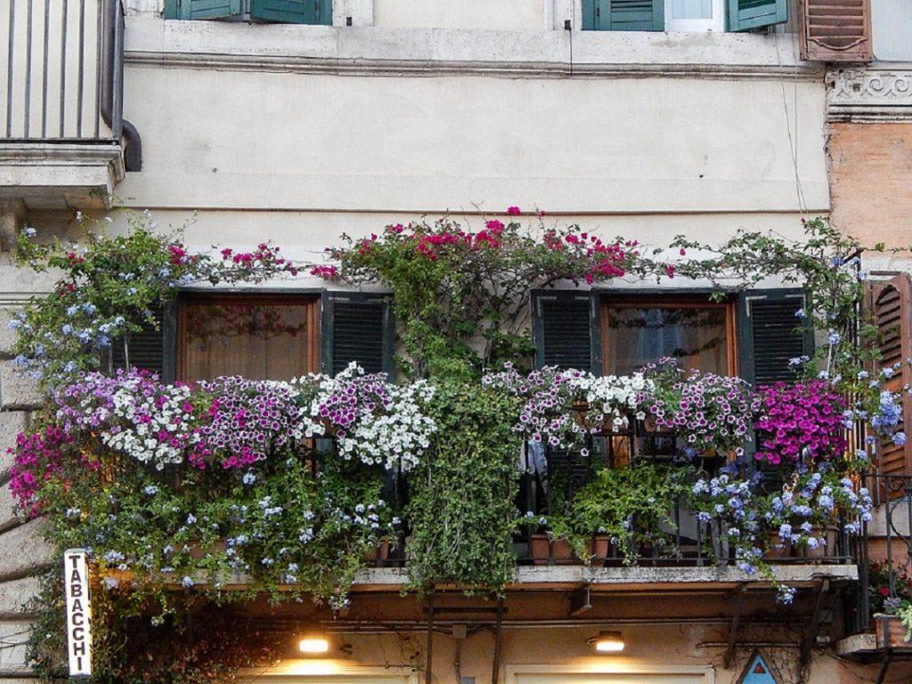 Sacada florida na Piazza Navona.